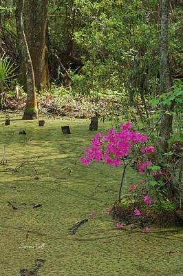 Springtime At The Audubon Swamp Garden Art Print by Suzanne Gaff