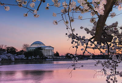 Ollivrosa Wall Art - Photograph - Springtime At The Tidal Basin by Amy Sorvillo