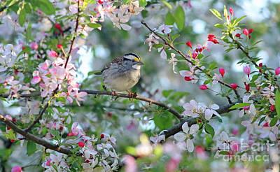 Photograph - Springtime Beauty by Debbie Parker