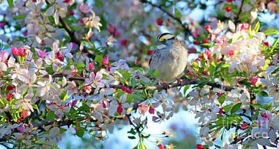 Photograph - Springtime Beauty Too by Debbie Parker