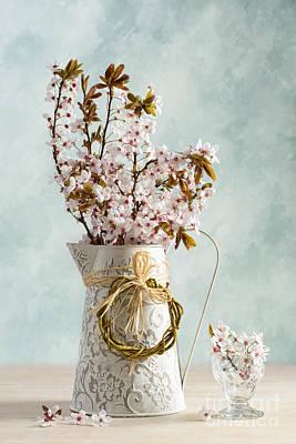 Cherry Blossoms Photograph - Springtime Blossom by Amanda Elwell