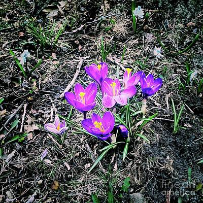 Frank J Casella Royalty-Free and Rights-Managed Images - Springtime Blossom by Frank J Casella