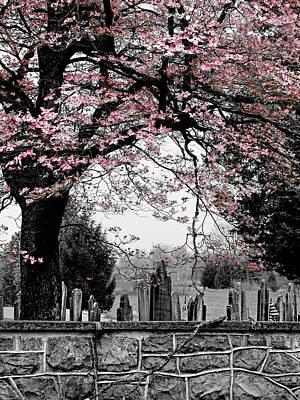 Photograph - Springtime by Brenda Conrad