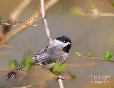 Photograph - Springtime Chickadee by Kerri Farley