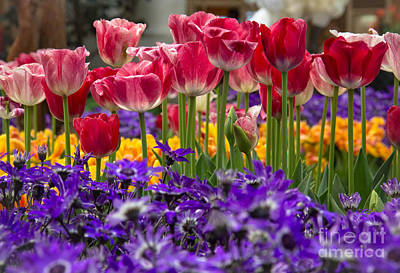 Springtime Colors Art Print by Amy Sorvillo