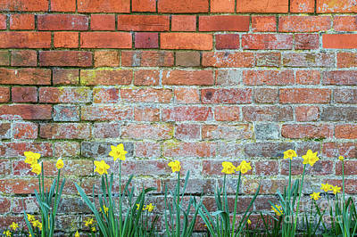 Of Flowers Photograph - Springtime Daffodils by Tim Gainey