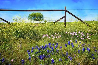 Photograph - Springtime Fence Line by Lynn Bauer