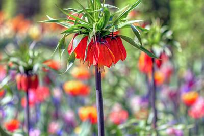 Photograph - Springtime Flowers by Nadia Sanowar
