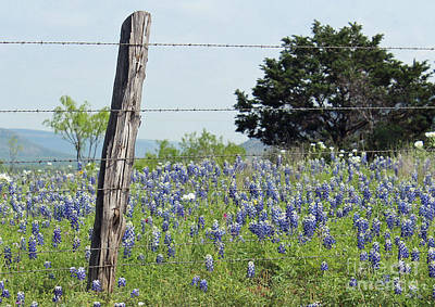 Cedar Fence Photograph - Springtime For Texas by Joe Jake Pratt
