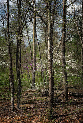 Photograph - Springtime Forest by Linda Shannon Morgan