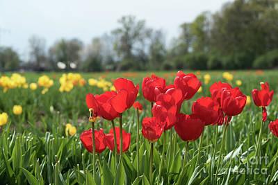 Photograph - Springtime by Giovanni Malfitano
