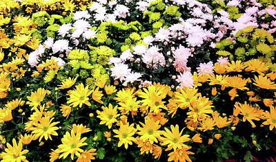 Bight Colors Photograph - Springtime IIi by Neal Alicakos