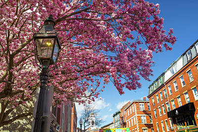 Photograph - Springtime In Boston by Walt Baker