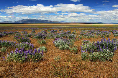 Springtime In Honey Lake Valley Art Print by James Eddy