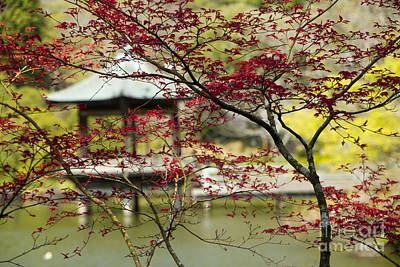 Photograph - Springtime In Japan by Waterdancer