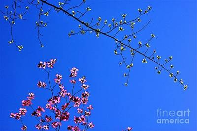 Photograph - Springtime In Louisville by Merle Grenz