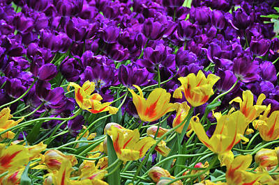 Photograph - Springtime In New York City by Mike Martin
