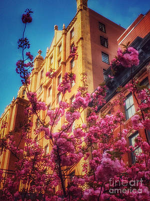Photograph - Springtime In New York - Pretty In Pink by Miriam Danar