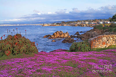 Springtime In Pacific Grove Art Print