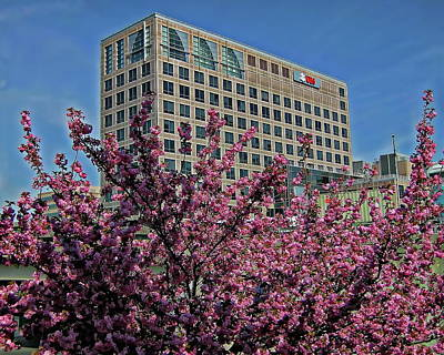 Photograph - Springtime In Stamford by Anthony Dezenzio