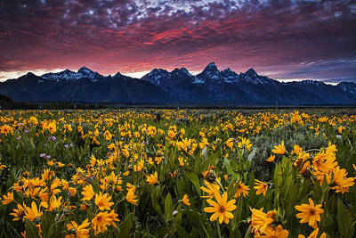 Teton Wall Art - Photograph - Springtime In The Mountains by Andrew Soundarajan