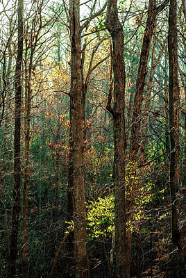 Photograph - Springtime In The Nc Pines by Jim Moore
