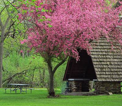 Photograph - Springtime In The Park by Lori Frisch