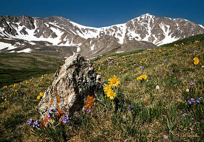 Photograph - Springtime In The Rockies by Joe Bonita