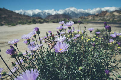 Photograph - Springtime In The Sierras by Margaret Pitcher