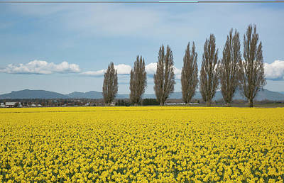 Photograph - Springtime In The Skagit Valley by Elvira Butler