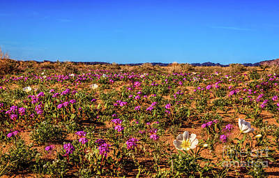 Photograph - Springtime In The Sonoran Desert by Robert Bales