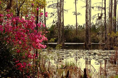 Springtime In The Swamp Print by Susanne Van Hulst