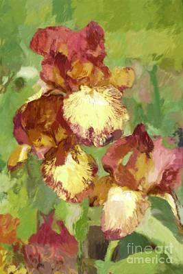 Springtime Iris Art Print by Susan  Lipschutz