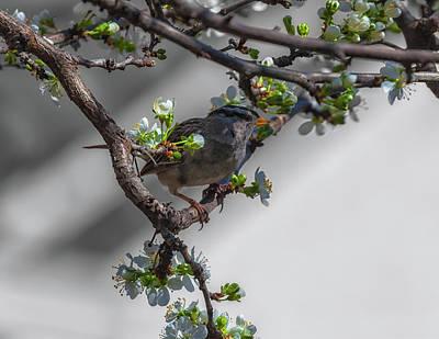 Photograph - Springtime by Jonathan Nguyen