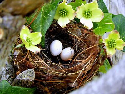 Baby Bird Photograph - Springtime by Karen Wiles