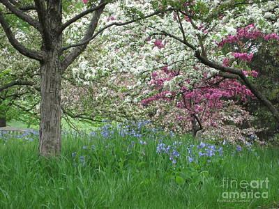 Photograph - Springtime by Kathie Chicoine