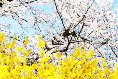 Photograph - Springtime by Lilian Forsyth