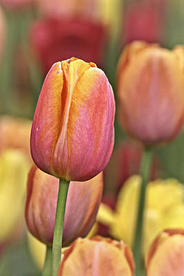 Colorful Photograph - Springtime  by Marcia Colelli
