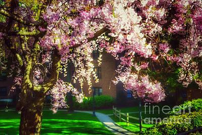 Photograph - Springtime Melody - Card by Miriam Danar