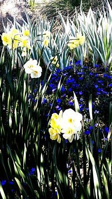 Photograph - Springtime by Nikki Dalton
