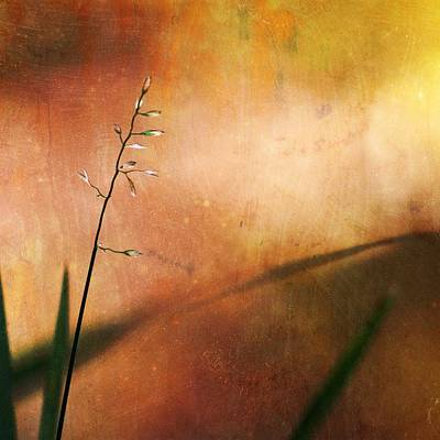 Mixed Media - Springtime Of My Love by Diane Paquin