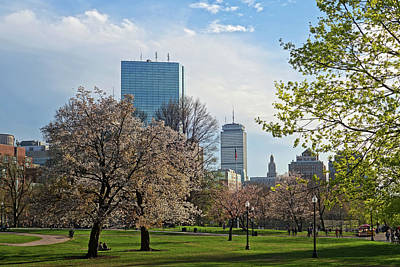 Photograph - Springtime On Boston Common Boston Ma by Toby McGuire