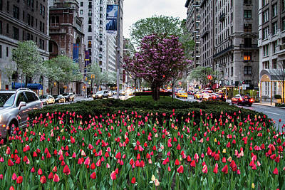 Photograph - Springtime On Park Avenue by Robert J Caputo
