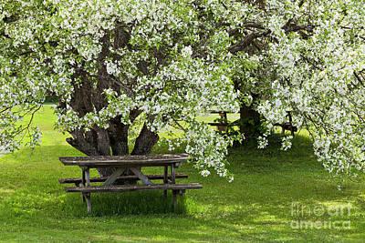 Photograph - Springtime Picnic by Alan L Graham