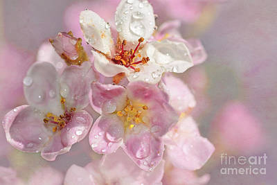 Photograph - Springtime Pink By Kaye Menner by Kaye Menner