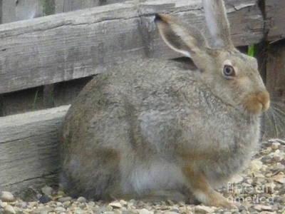 Springtime Rabbit Art Print