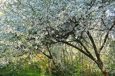 Photograph - Springtime by Ramona Matei