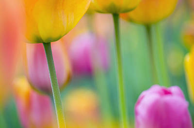 Decorativ Photograph - Springtime by Silke Magino