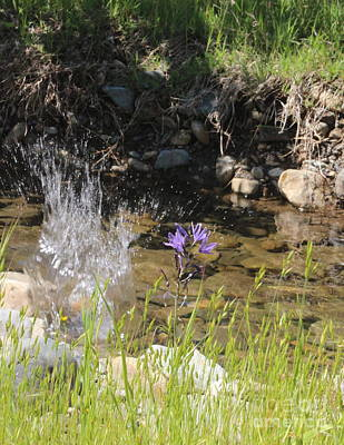 Photograph - Springtime Splash by Marie Neder