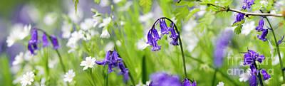 Photograph - Springtime Splender by Tim Gainey